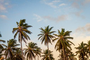 Palm Trees and Mobile Friendly Websites